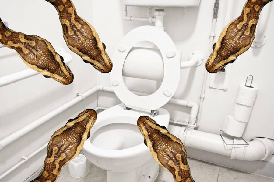 toiletpitone