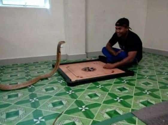 uomo si sposa con un cobra