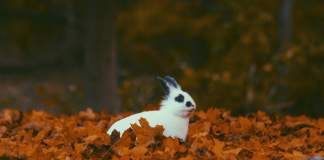 sognare un coniglio