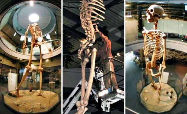 scheletri giganti