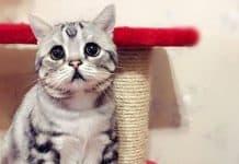 cat - Copia