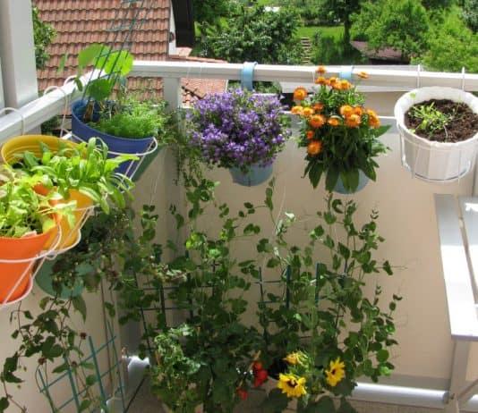 fare un orto in casa