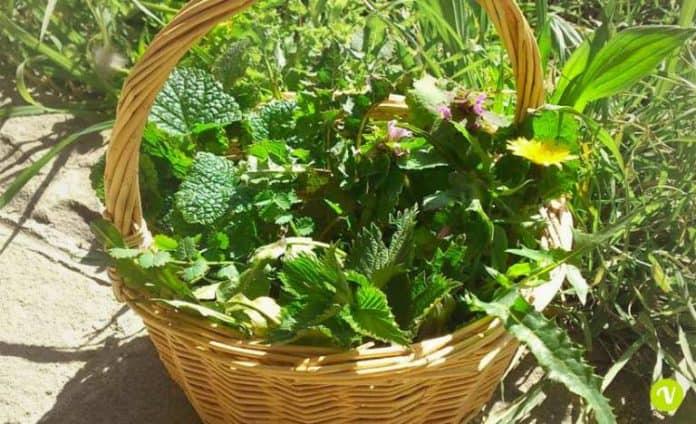 piante ed erbe