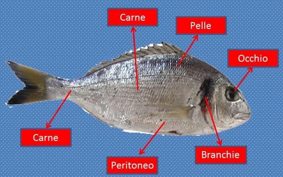 Come vedere se il pesce è fresco