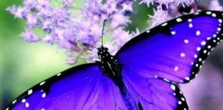 una meravigliosa farfalla