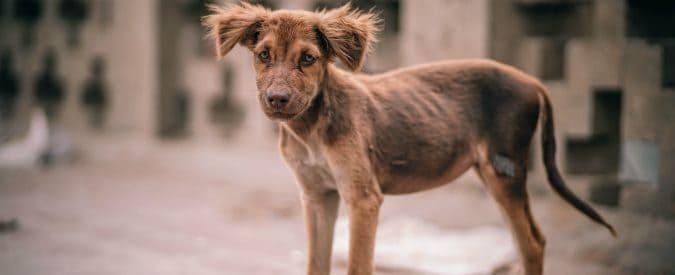 strage di cani e gatti ai Mondiali