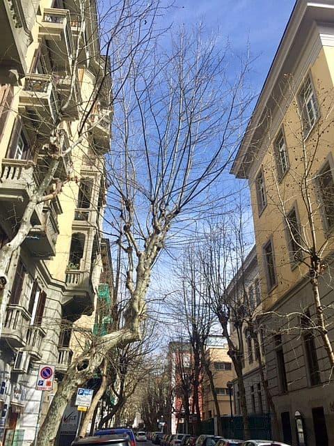 Vomero cade un albero in via Scarlatti