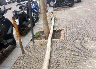 Vomero cade un albero nella centralissima via Scarlatti