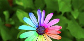 Un fiore fa capolino