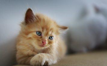 cat-3266673_960_720
