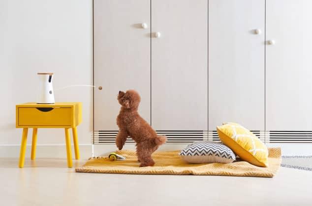Furbo Dog Camera videocamera per cani per controllare cane a distanza