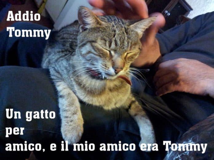 addio tommy
