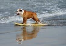 animali in spiaggia